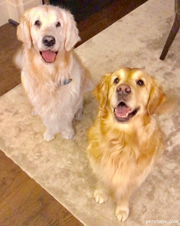 اتم و هومبر دو سگ زیبای الکسیس