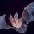 تعبیر خواب خفاش , دیدن خفاش در خواب چه تعبیری دارد؟