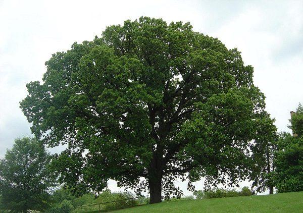 تعبیر خواب درخت , دیدن درخت در خواب چه تعبیری دارد؟