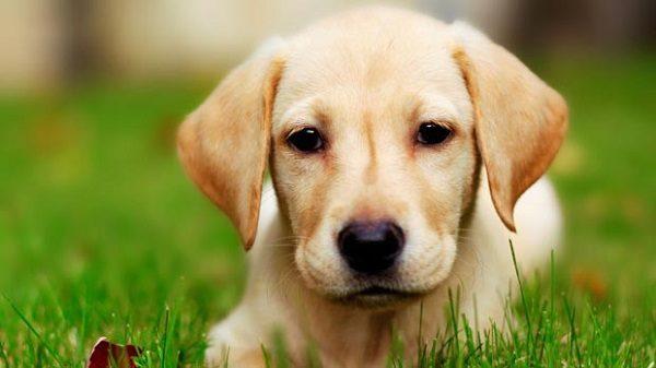 تعبیر خواب سگ , دیدن سگ در خواب چه تعبیری دارد؟