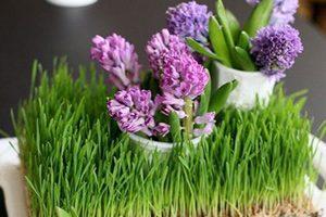 ۱۰ روش عالی برای زیباسازی منزل در عید نوروز با سبزه و گل طبیعی