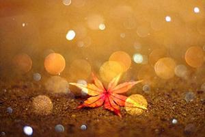 اس ام اس و متن های زیبای پاییز (۵)