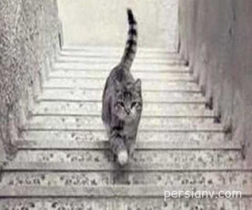 تست هوش تصویری گربه و پله