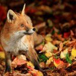 اس ام اس و متن های زیبای پاییز (۸)