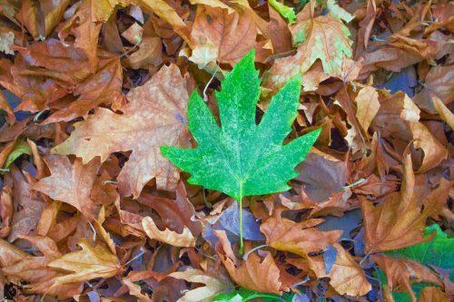 اس ام اس و متن های زیبای پاییز 8