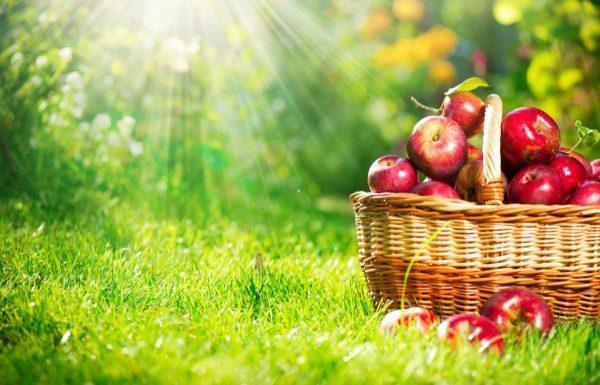 تست هوش تصویری   سیب ها در اندازه های متفاوت