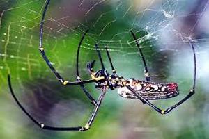 داستان آموزنده | نجات مرد جهنمی با تار عنکبوت