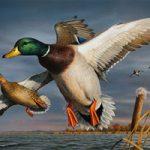 داستان پندآموز | شکار مرغابی