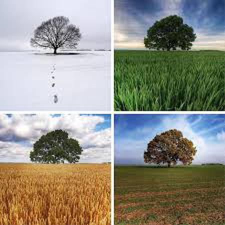 داستان جالب درخت گلابی