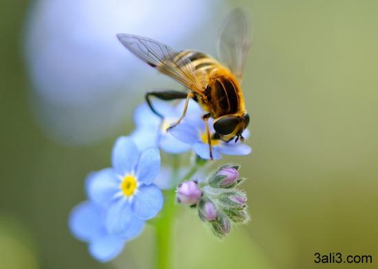 تست هوش تعداد زنبورها و گل ها