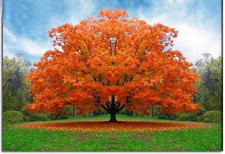 اس ام اس روز درختکاری (۱)