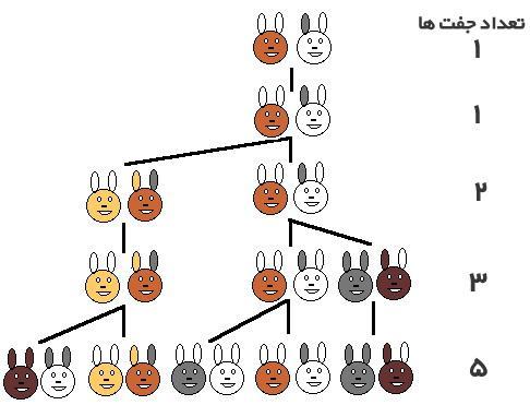 معمای جالب   شمار خرگوش ها بعد از یک سال!