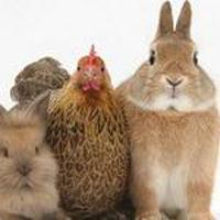 معمای ریاضی | خرگوش ها و مرغ ها