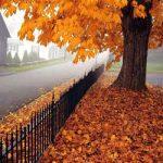 اس ام اس فصل پاییز (11)
