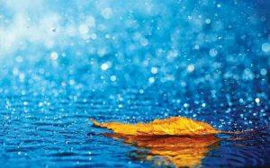 داستان آموزنده ورد باران