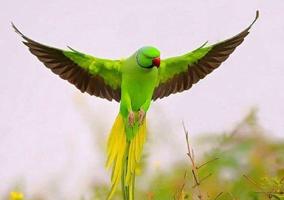 داستان آموزنده | پرنده نصیحتگو