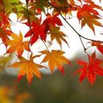 داستان کوتاه | شاخه و برگ
