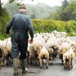 داستان زیبای | گوسفند صدقهای