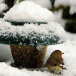 اس ام اس روزهای برفی زمستان (۶)