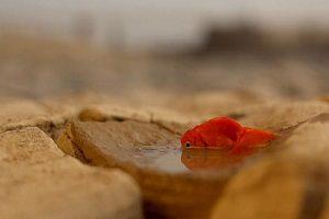 هشتک خوزستان آب ندارد فقط برای مسوولین نیست