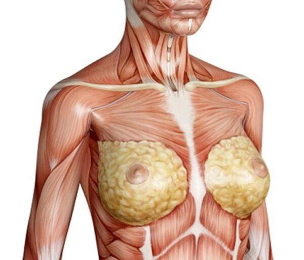 سینه زنان