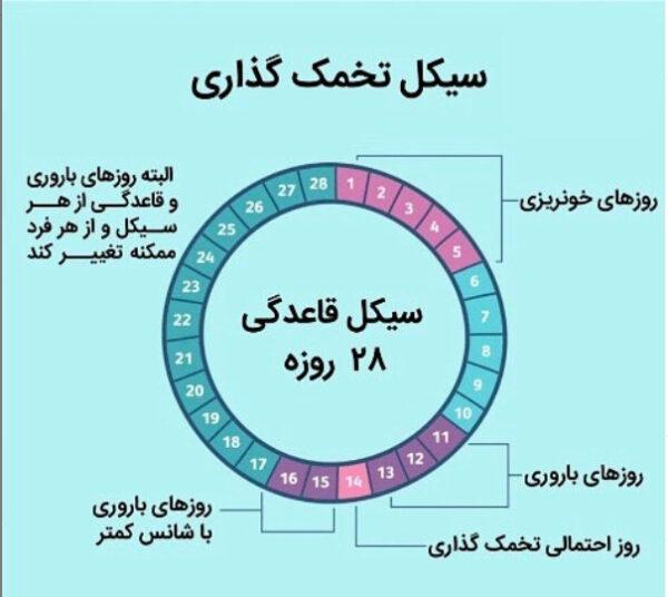 نمودار چرخه قاعدگی