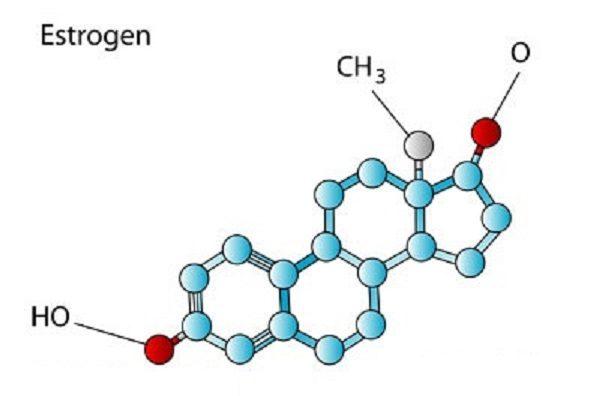 هورمون زنانه استروژن